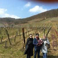 Photo taken at Kintzheim by Fabien F. on 4/1/2013