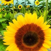 Das Foto wurde bei Sunflower Garden von A E. am 4/9/2013 aufgenommen