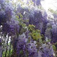Photo taken at Parco Villa Duchessa di Galliera by Andrea T. on 4/19/2015