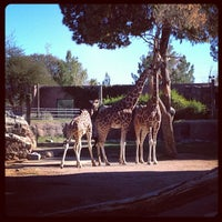 Photo taken at Reid Park Zoo by Christopher W. on 1/17/2013