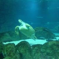 Photo taken at COEX Aquarium by Jae Yeon C. on 8/2/2013