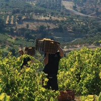 Photo taken at Douloufakis winery by Douloufakis winery on 11/10/2016
