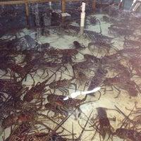 Photo taken at Lobster Alive by Lestat Jay L. on 2/4/2014