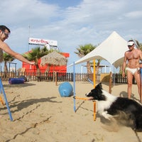 Foto scattata a Rimini Dog No Problem da Rimini Dog No Problem il 2/16/2015