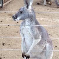Photo taken at Kangaroo Exhibit by Grigory S. on 1/24/2014