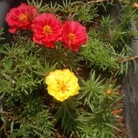 Photo taken at Ouro Verde Arte Jardim by Gino C. on 11/2/2012