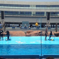Photo taken at Acquatica - Sea Lion Show by Shiermalyn T. on 7/16/2016
