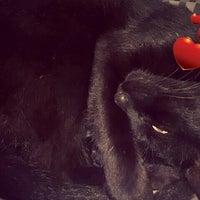 Photo taken at Paulo Pet Shop by Fabiano Torquato (. on 10/18/2014