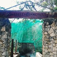 Photo taken at university of san carlos butterfly sanctuary by Berna A. on 2/15/2014