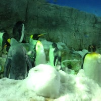 Photo taken at Osaka Aquarium Kaiyukan by Morgan M. on 9/29/2012