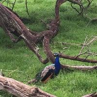 Снимок сделан в Zoo Lake пользователем Sultan S. 2/20/2017