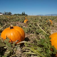 Photo taken at Apple Annie's Pumpkins And Produce by Pâmela #. on 10/24/2015