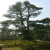 Photo taken at Neagarinomatsu Pine by 砥石 D. on 3/25/2017