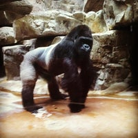 Photo taken at World of Primates at Ft. Worth Zoo by Deanna E. on 12/31/2012
