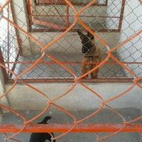 Photo taken at veterinaria emanuel duenas armenta by Michel B. on 2/9/2014