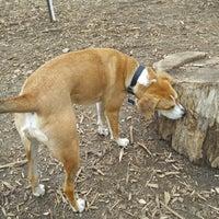 Photo taken at Cunningham Park Dog Run by wayneywonder on 4/8/2015