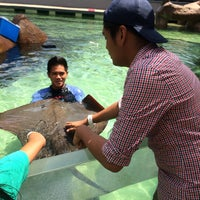 Photo taken at Sharks & Rays Encounter by Keempee G. on 5/15/2016