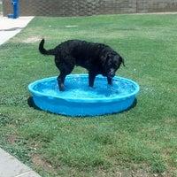 Photo taken at Desert Vista Dog Park by Stacie M. on 6/14/2013