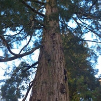 Photo taken at Giant Redwood Tree, Killerton by Richard F. on 11/17/2012