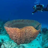 Photo taken at Go West Diving by Dive Curacao O. on 5/11/2014