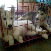 Photo taken at BOYSAN Grooming and Care Centre Perumahan Candi Gebang blok A-2 by Listiani K. on 5/29/2014