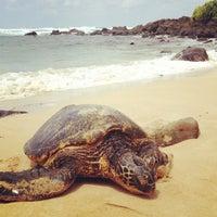 Foto tomada en Laniakea (Turtle) Beach por Nathalie D. el 3/31/2013