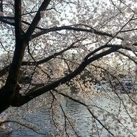 3/28/2013にkazunoko 夏.が井の頭恩賜公園で撮った写真