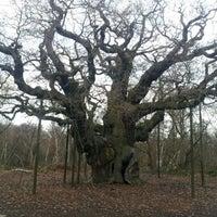 Снимок сделан в Sherwood Forest National Nature Reserve пользователем Gecko R. 12/15/2012