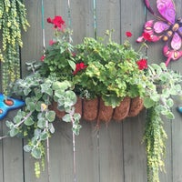 Photo taken at Pike Nurseries by Michelle M. on 8/20/2016