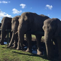 Photo taken at knysna elephant sanctuary by Fitterstronger on 7/27/2015