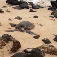 Foto tomada en Laniakea (Turtle) Beach por Tatsuaki O. el 3/23/2013