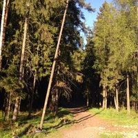 Photo taken at Сертоловский лес by Galinka S. on 6/6/2017