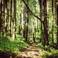 Foto tomada en Forest Park - Wildwood Trail por Jen J. el 7/19/2013