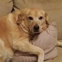 Photo taken at VetPro Pet Care by VetPro Pet Care on 7/1/2017