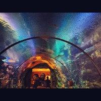 Photo taken at Shark Reef Aquarium by Omar H. on 9/29/2012