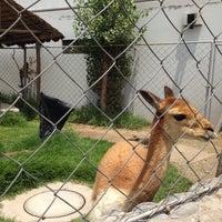 Photo taken at Zoológico de camélidos sudamericanos by Úrsula B. on 1/30/2015