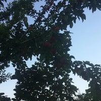Photo taken at Derebahçe by Metin K. on 7/30/2014