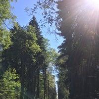 Photo taken at Эко-тропа в Комарово by Mrs.Todd on 6/14/2018