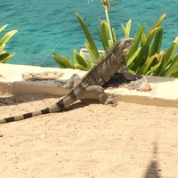 Photo taken at Buddy Dive Resort Bonaire by Bria H. on 3/6/2014