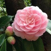Снимок сделан в Rikugien Gardens пользователем Rick d. 3/23/2013
