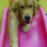 Photo taken at Dogtopia by Jeff L. on 9/21/2012