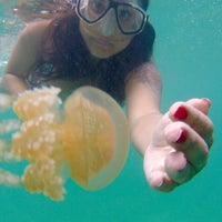 Photo taken at Stingless Jellyfish Kingdom by Pelin R. on 3/12/2016
