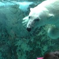 Photo taken at Polar Bear Museum by houboku n. on 7/10/2013