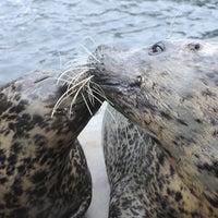 Photo taken at New York Aquarium by New York Aquarium on 4/1/2015