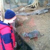 11/25/2012 tarihinde Anitra L.ziyaretçi tarafından Indianapolis Zoo'de çekilen fotoğraf