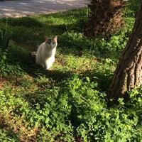Photo taken at Nar Kız Parkı by Hazel E. on 1/22/2016