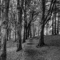 Photo taken at Portglenone Forest Park by Ryan B. on 7/21/2014