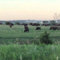 Photo taken at Buffalo Herd by Brian K. on 6/11/2013