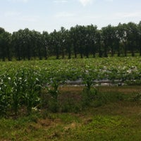 Photo taken at Cat And Fiddle Strawberry Fields by Miss L. on 7/18/2014
