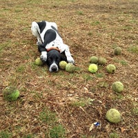 Photo taken at Rowayton Dog Park by Thomas C. on 11/26/2013